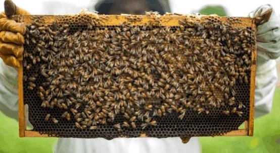 basic beekeeping hive