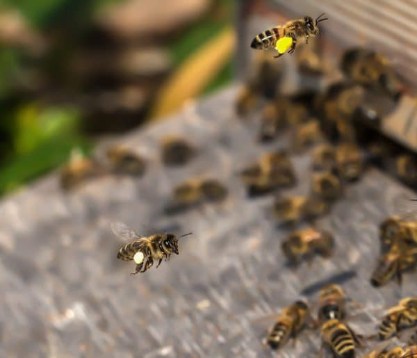 bee, beehive, insect-3216973.jpg